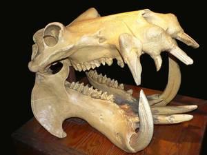 Dans les Catacombes de Lenore62 / L'Ossuaire Animalier