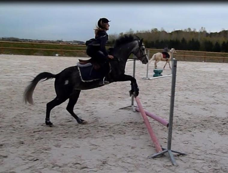 Petit poney magique <3