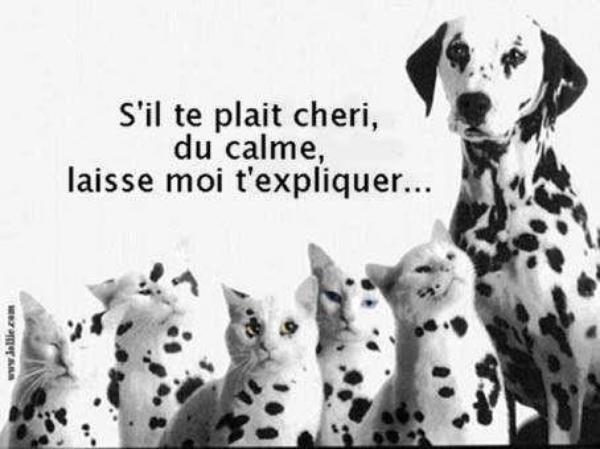 Les chiens.