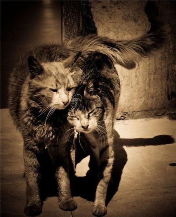 Les chats,