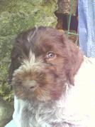 mon tio chien =)