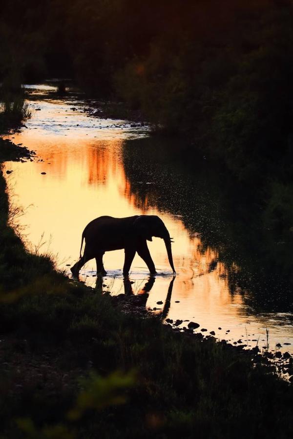 JOURNEE MONDIALE DE L'ELEPHANT