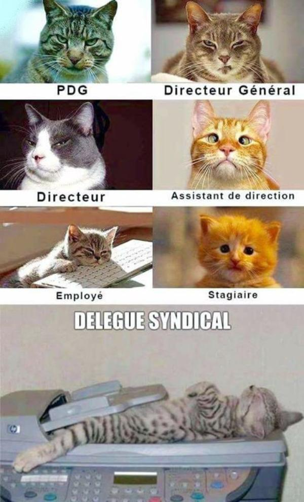 CHATS TOUJOURS