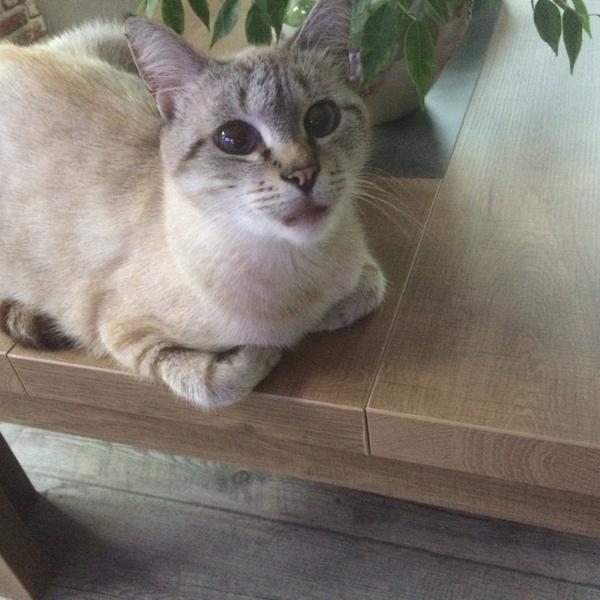 Mon chat Bounty