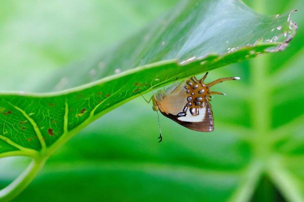 Papillon aux perles argentées