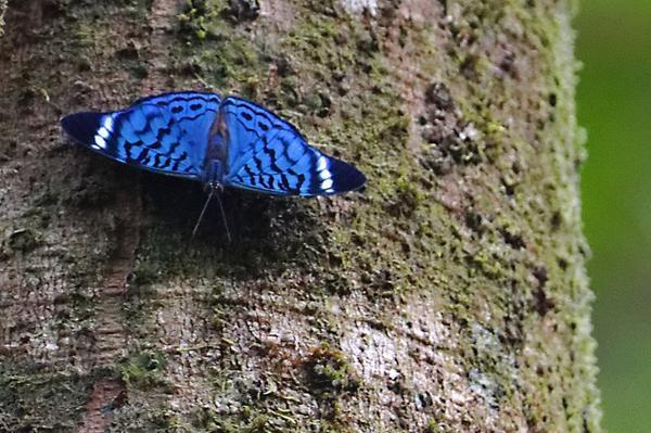Papillon (encore un)