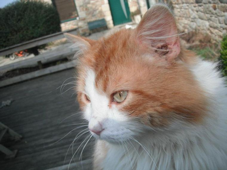 Caramel, mon chat.<33