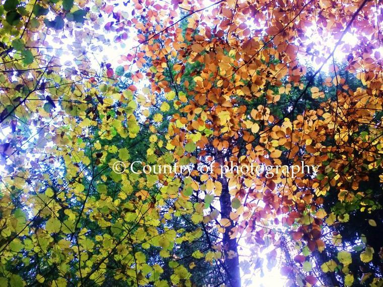 Les couleurs de l'automne. ღ