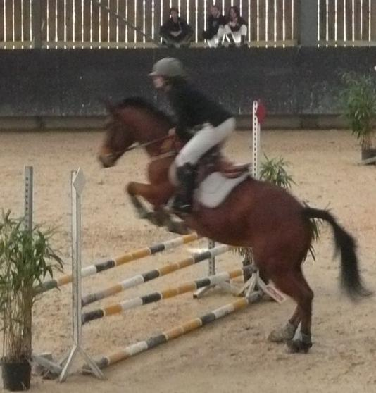 Nouveaux chevaux pour la compétition !!