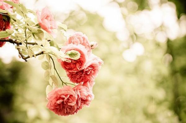 Troisièmement, ne te laisse jamais, au grand jamais, tomber amoureux.