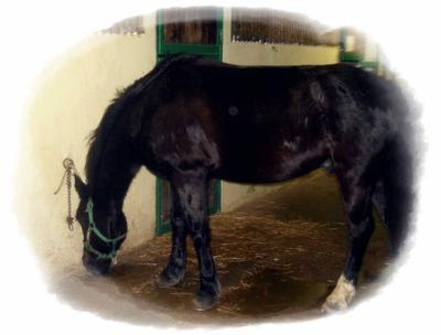 Cours d'équitation [du 08/12 au 29/12 ]
