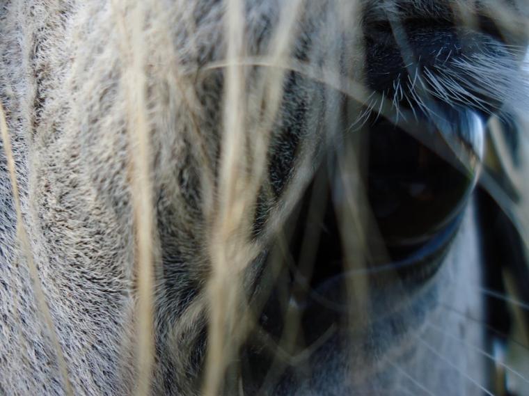 La plus Belle conquête de l'homme : Le cheval ♥