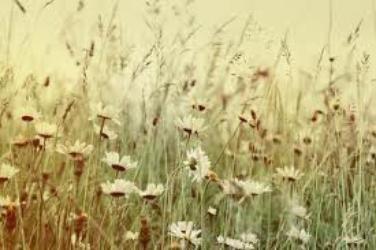 Parce qu'avec ces fleurs il y a tellement de pétales donc tellement de possibilités... je t'aime, un peu, beaucoup [...]