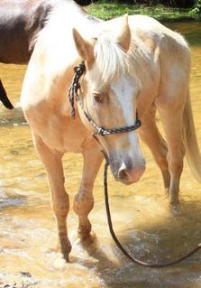 « L'Homme pose des entraves au cheval.. Sans doute pour oublier ses propres chaînes ! »