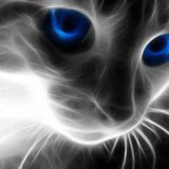 il les trop beau le chat vous trové pas qui la des beau yeux bleu