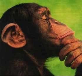 """La théorie dite """"du 100ème   singe """""""