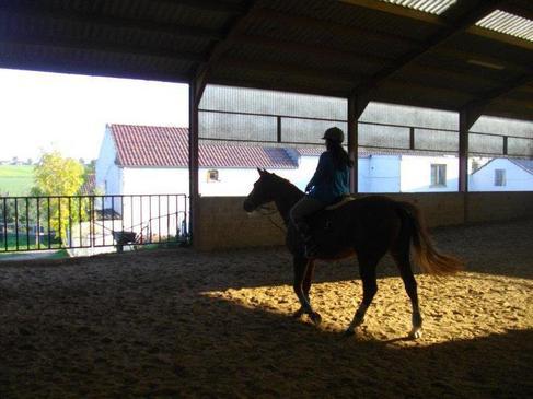plus qu un sport,qu une passion.L'équitation,une façon de vivre <3