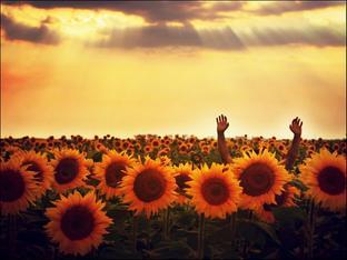 La vie n'est qu'une longue perte de tout ce qu'on aime. ✝