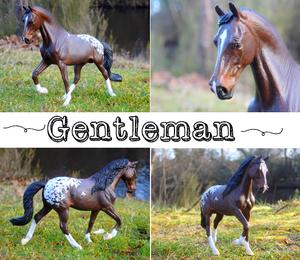 Gentleman des Crins Noirs