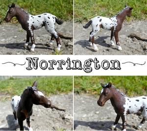 Norrington des Crins Noirs