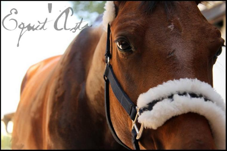 Equit'Astuces ➩ Sommaire