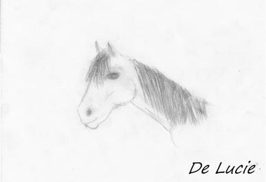 Mon tous prémier dessins d'un cheval. ( n°1 )