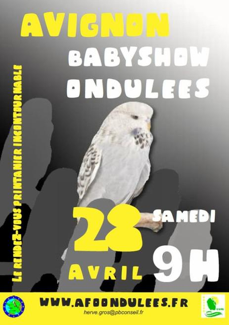 Baby Show Perruches Ondulée de Posture.