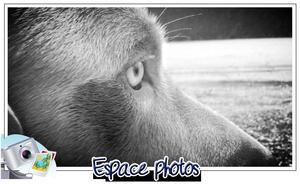 Espace photos !