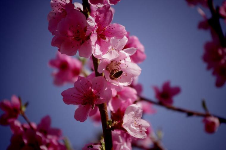 Hey spring!