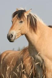 Pony-games ?