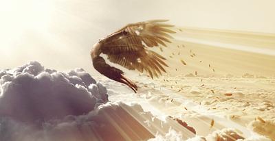 Wings Fall