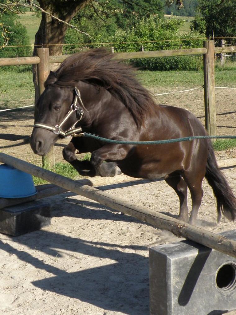 La vue de ce petit cheval m'impressionna d'une manière que je ne puis très bien expliquer. Elle était plus qu'exceptionnellement fort, rapide et superbe dans sa façon de se mouvoir, elle me faisait rêver.... Et je rêve toujours ...