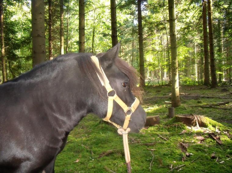 Promenons nous dans les bois, pendant que le loup n'y est pas ...
