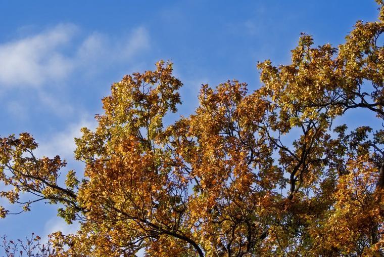 feuilles automnales