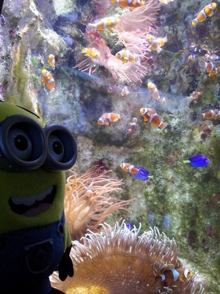 Après Dave à la montagne en Italie, voici Dave à la mer