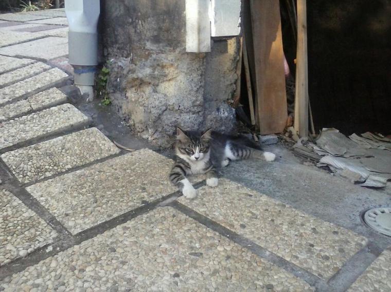 Nouveaux chats