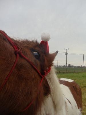 Vacances de Noel :D