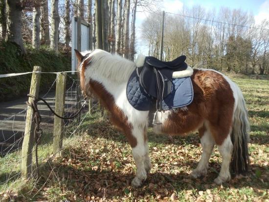 Reprise du boulot monté ;) SOLEIL , Mon bébé d'amour  de poney trop gentil <3