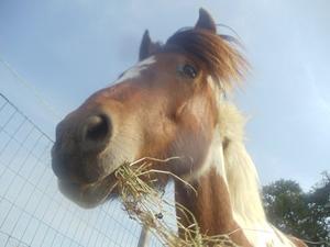 Petit poney parfait <3