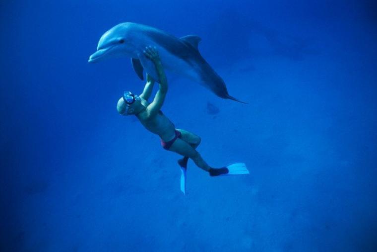 Plonger avec les dauphins