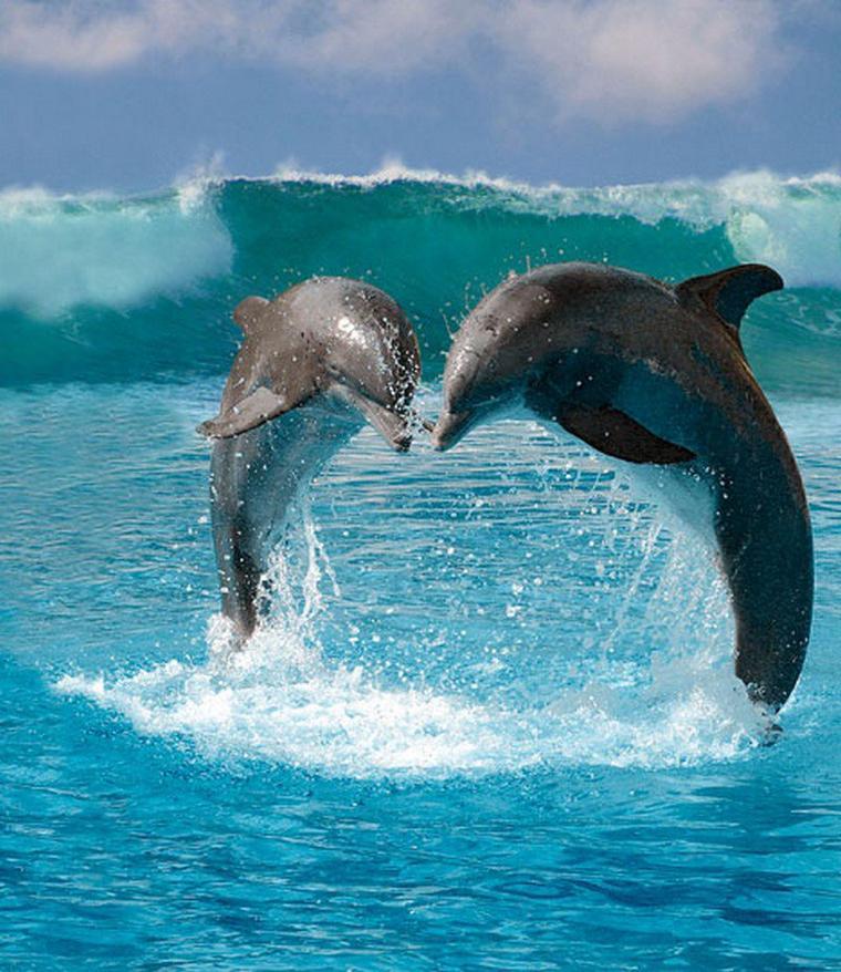 Simplement de belles photos de dauphins