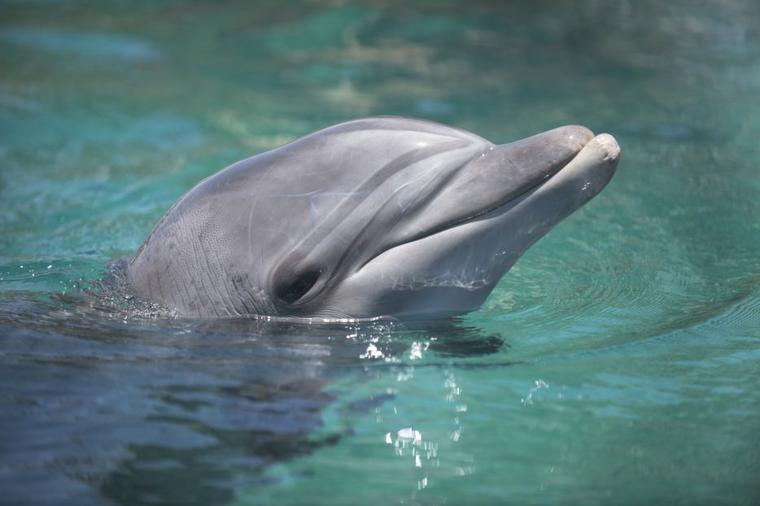 De belles photos de dauphins......