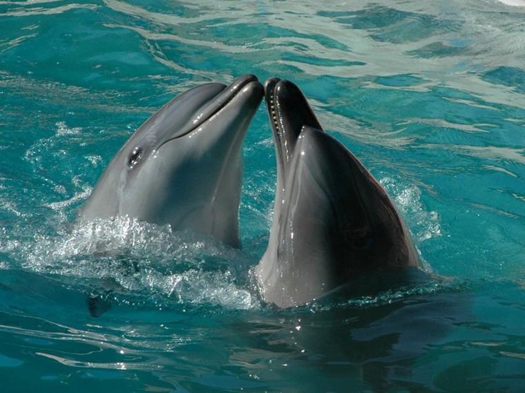 Des dauphins......