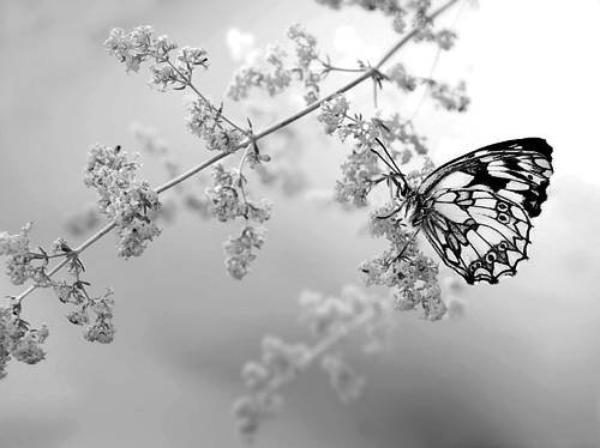 ___________   «Savoir qu'on a plus rien à espérer n'empêche pas d'attendre.»   Marcel Proust  ___________