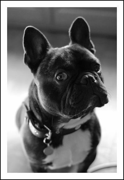#. 2 Dogue-Boule