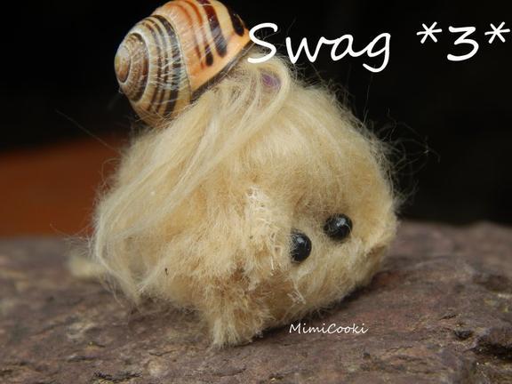 scéance photo - crevette chauve