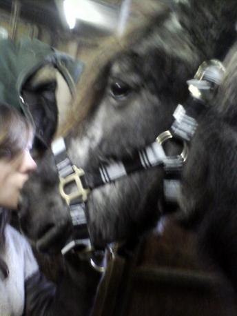 Petit poney d'amour. ♥