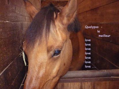 Qualypso