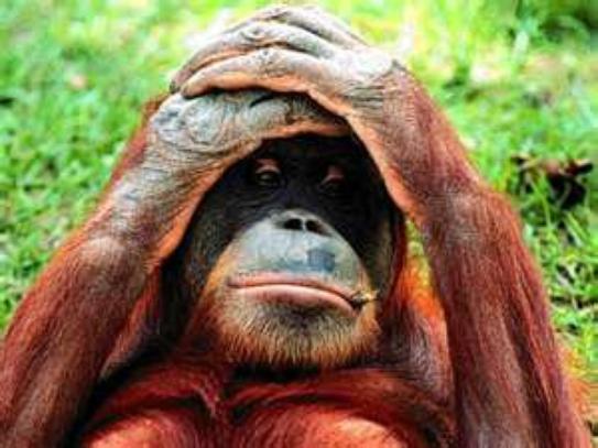 mdrr le singe, Je me demande a qui il pense ptdr