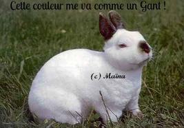 Le Nain Rex (